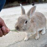 広島県のウサギ島こと大久野島へ、うさぎちゃんにいっぱいウサウサされてきたよ( *˘ ³˘)