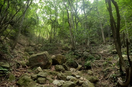 裏登山道から中登山道