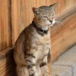 猫寺として有名な福井県の御誕生寺で、たくさんのネコに会ってきたよ