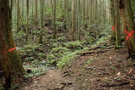 納古山 中級コース