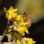 国営木曽三川公園 フラワーパーク江南 ミツバチ