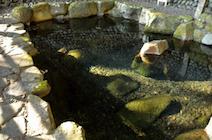 野中の清水