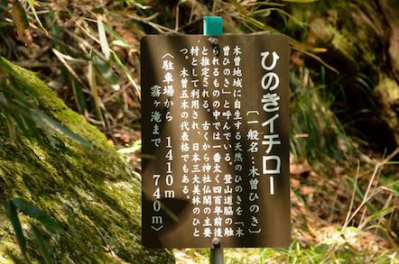 田立の滝 ひのきイチロー