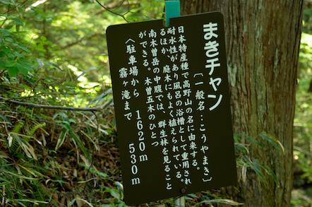 田立の滝 まきチャン