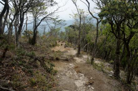 竜ヶ岳 表道登山道