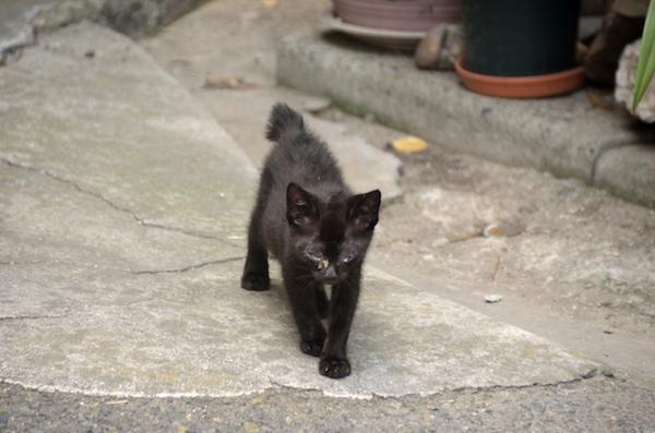 龍泉寺 猫