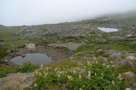 白山 お池巡り 五色池