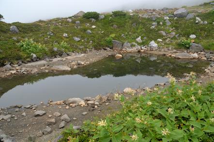白山 お池巡り 百姓池