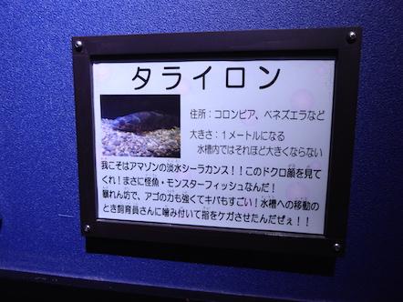 竹島水族館 タライロン