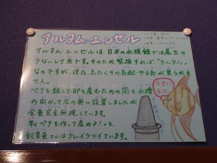 竹島水族館 アルタムエンゼル