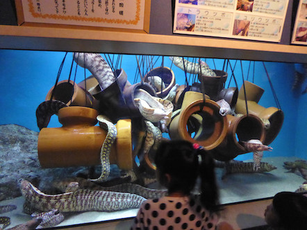 竹島水族館 ウツボ