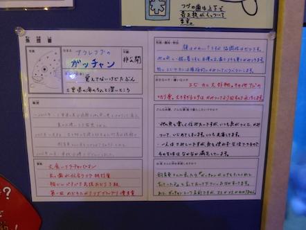 竹島水族館 アラレフグ