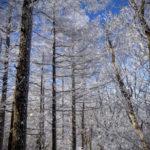 守屋山 冬 雪山 霧氷