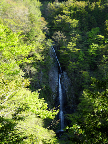 毛無山 登山 不動の滝