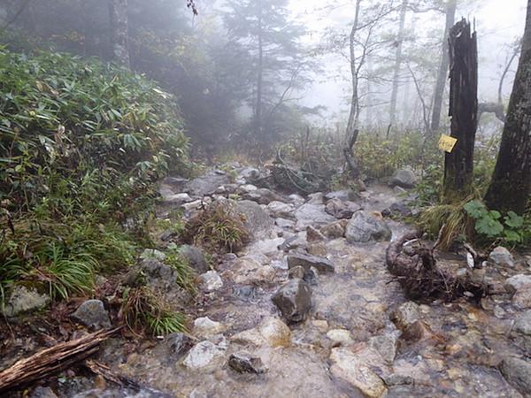 一ノ沢登山道 下山