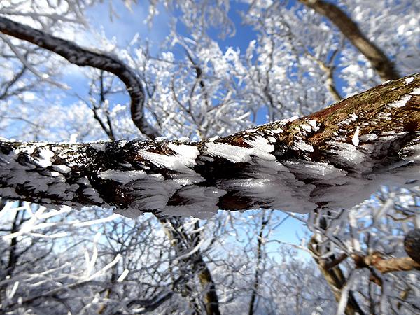 綿向山 表参道コース 霧氷