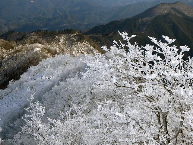 高見山 山頂 霧氷