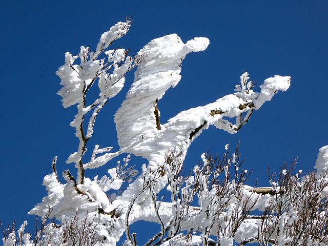 高見山 平野登山道 霧氷